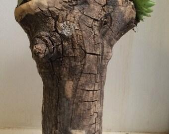Natural Succulent Planter