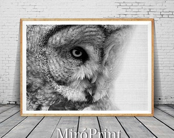 Owl Print, Owl Photo, Wilderness Wall Art, Printable Owl Poster, Black and White , Woodlands Nursery Decor, Animal Photo, Bird Wall Decor