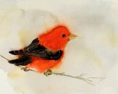 Valentines Day Bird Painting / Artwork Print / Small red watercolor / Colorful singing bird / House gift Scarlet Tanager wildlife animal