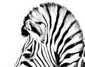 Zebra Art Print 8x10 Wate...
