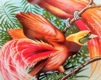 Vintage Tin, Floral Tin, Metal Lidded Tin, Birds Tin, Small Round Tin, Storage Tin Canister, Flowers and Birds, Exotic Birds, Littho Tin