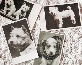 RESERVED listing - Antique dog photo postcard lot, vintage dog postcard lot, antique terrier photo postcard lot - RESERVED LISTING