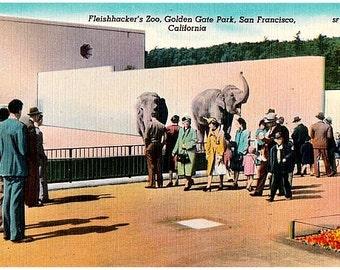 Vintage California Postcard - At the San Francisco Zoo (Unused)