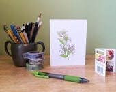 Botanical art lily note card with flower lore. Garden note card. Spring note card. Easter card. Spring birthday. Mothers Day card.