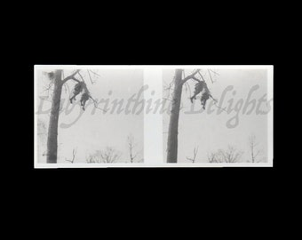 Creepy French Stereo Photo of Two Cadavers Hanging from a Tree / WWI / Execution / Death