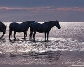 Sunset By the Sea - Fine Art Horse Photograph - Horse - Camargue