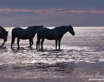 Sunset By the Sea - Fine Art Horse Photograph - Horse - Camargue - Fine Art Print