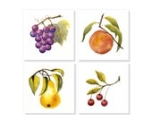 "Four 6""x6"" FINE ART PRINTS of Watercolor Fruit Signed Artwork, Peach, Grapes, Pear, Cherries, Kitchen, Dining Room Home Wall Decor Gift Idea"