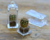 1 - REAL Barrel Cactus PLANT Pendant Charm Rectangle Shape Terrarium Living Plant Charm Echinocactus Grusonii Plant Garden Jewelry Supplies