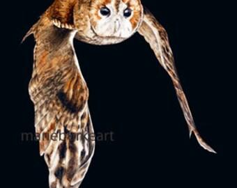 Tawny Owl on Black - fine art print, owl painting, bird painting, owl watercolour, wall art