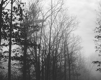 Winter Photography, Black and White Nature Photography, Trees, Forest, Fog, Nature Landscape, Tennessee B&W Photograph Print