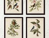 Bird and Botanical Print Set No. 5, Botanical Print Set, Vintage Bird Prints, Vintage Botanicals, Wall Art, Print, Canvas Art, Print Sets