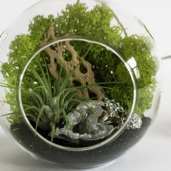 Geode and Pyrite Air Plant Terrarium Kit with Black Sand || Small Round Hanging