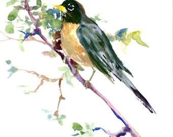 "American Robin 12"" X 9"" bird art"