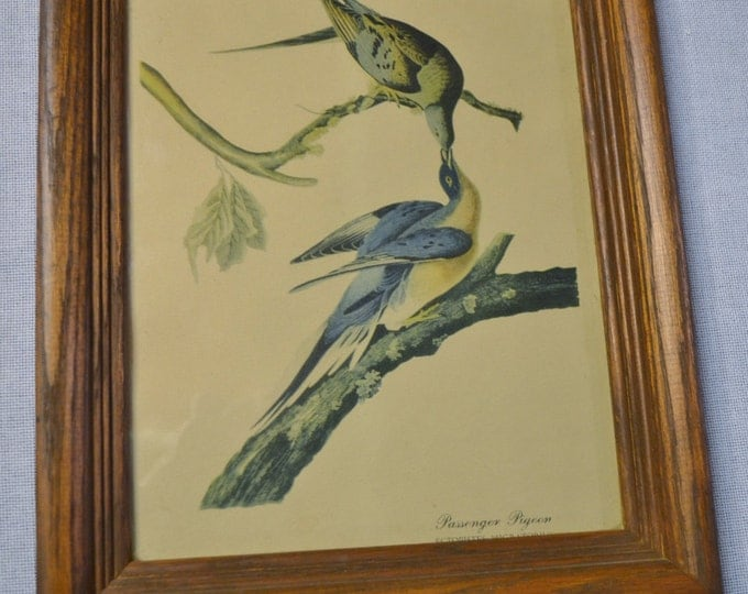 Vintage Passenger Pigeon Print Wooden Frame with Glass Country Decor PanchosPorch