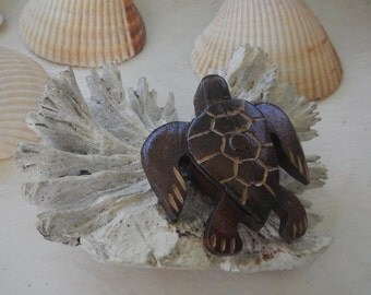 Driftwood sea turtle hatchling in coral reef