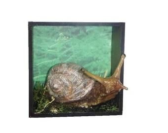 Snail Shadow Box_sculpture, forest, woodland, animal, mollusk, bug, altered, art, shadowbox