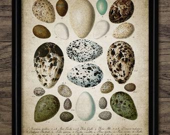 Bird Egg Print - Bird Egg Decor - Bird Watcher - Egg Chart - Bird Lover - Digital Art - Printable Art - Single Print #98 - INSTANT DOWNLOAD