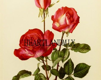 Vintage Flower Print Wall Art Graphic Download Printable Image