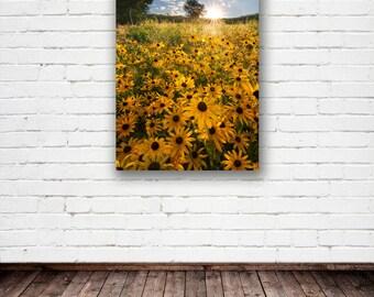 "Minnesota Fine Art Canvas, ""Backyard Beauty"", Wildflowers, Black Eyed Susans, Sunshine, Summer - Travel Photography, Wall Decor, Wall Art"