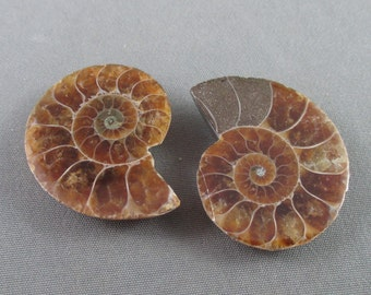 3 Ammonite Fossils - Unique Gift Idea, Healing Crystals and Stones, Ammonite Shell Fossil, Health Prosperity Success, Dinosaur Fossil T328