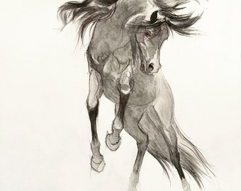 Pencil Horse Drawing Giclee,  Arabian Horse Drawing, Drawing Print, Giclee Print, Black and White Horse Art