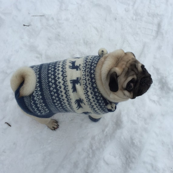 Knitting Pattern Dog Coat Pug : Dog Sweater Knit Dog Sweater Sweater for Pug by KristinaSHaSHop