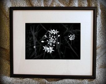 "Limited Edition Fine Art ""Appoggiatura"" Framed Photograph"
