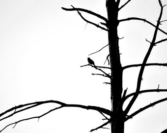 Black and White Bird Silhouette Photography, Nature Photography, Bird in Tree, Wall Art, Home Decor, Bird Print, Silhouette Print