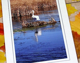 "Glitter Accent American White Pelican Fine Art Photography Card, Birds, Water, Nature, Fall, Autumn, Friendship, Thinking of You - 5"" x 7"""