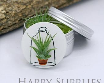 Wearable Tillandsia Plant Jewelry Pendant Art (WTP01)