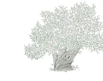 Olive tree - Signed and numbered giclée art print - A3 - Limited edition