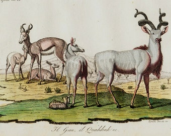 1823 Antique print of Deer, antelope, African fauna, fine hand colored engraving 193 years old