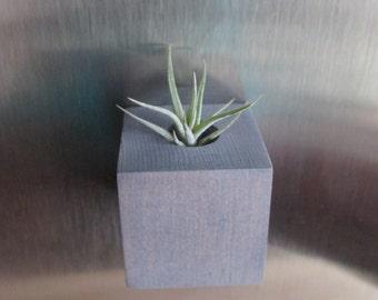 Air Plant + Magnetic Wood Holder | Distressed Blue Grey Air Planter - Plant Hostess Gift - Tiny Planter - Magnet - Plant Desk Decor | APM-1