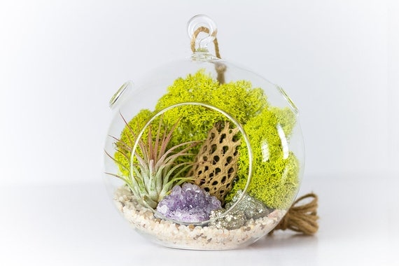 Amethyst Cluster with Pyrite Air Plant Terrarium Kit  || Medium Round Hanging