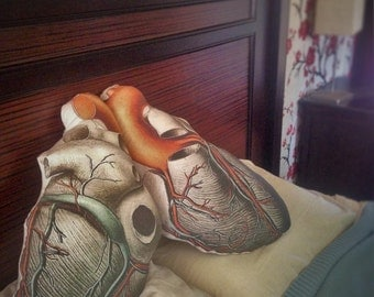 Scientifically Accurate Anatomical Heart Pillow