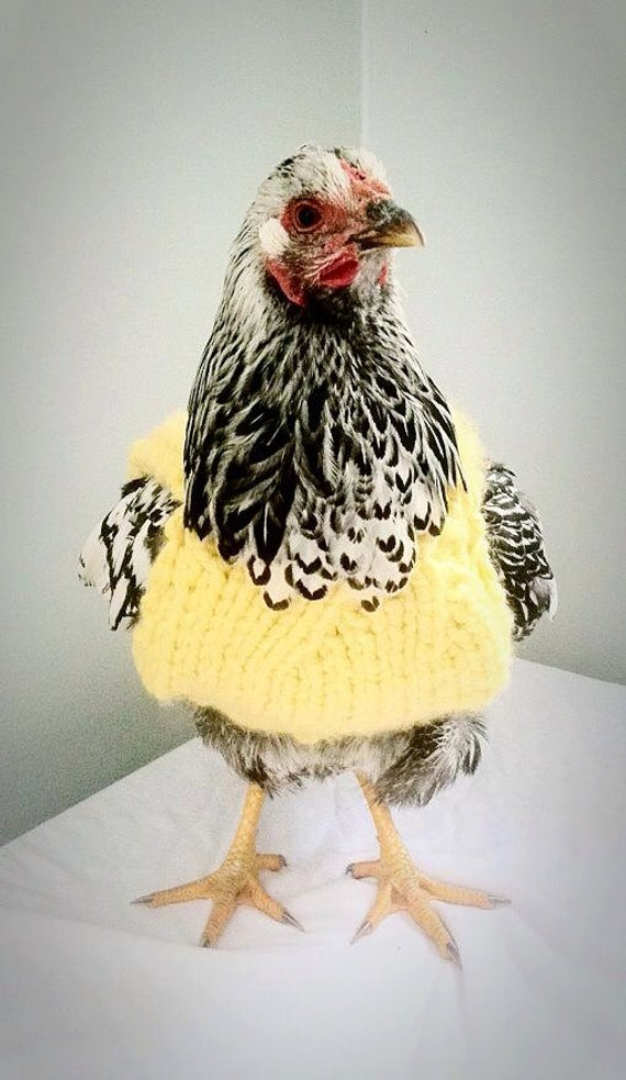 Chicken Sweater, Sweater for Chickens and Roosters, Sweater for Chickens, Chicken Clothes, Gift Ideas