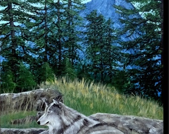 """Table Wolf lying on a rock, landscape of a clearing with dry grass, """"The lone wolf"""""""