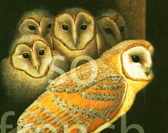 1961 Barn owl, Tyto alba, Bird print ornithological illustration Vintage nature decor