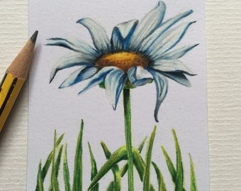 Single Daisy original ACEO/ Artists trading card. Coloured pencil. Free UK delivery.