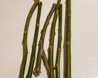 Willow Twigs for bunnies, guinea pigs, hamsters, chinchillas and rats