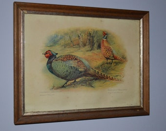 """Vintage Print of two pheasants, a Japanese Pheasant and a Ring-necked Pheasant, a Decorative Crafts Accessory made in England. 10.5"""" x 8.5"""""""