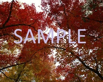 Fall leaves photography print