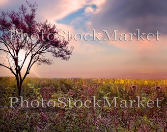 Wildflower Field, Fantasy Backdrop, Digital Background, Purple Flowers, PreMade Background, Photography Composite, Beautiful Sunset