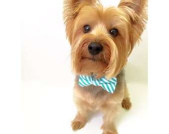 Turquoise Dog Collar With Bow Tie, stripes collar , white and green stripes, Fashionable Dog collar, Adjustable