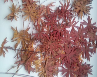 Pressed leaves, dried cranesbill leaves for craft , red to brown shades