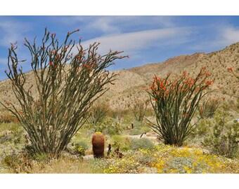 Desert Decor, Desert Landscape, Ocotillo Plants, Anza-Borrego Park, Serene, Home Decor, Large Wall Art, Green Yellow Blue Red