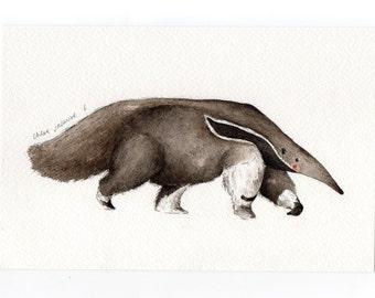 Original Watercolour Illustration- Anteater Painting