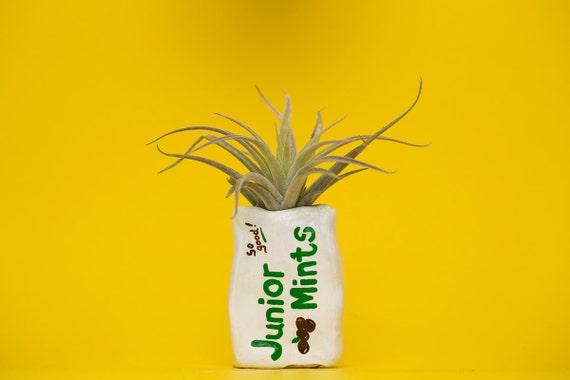 JUNIOR MINT PLANTER / candy planter