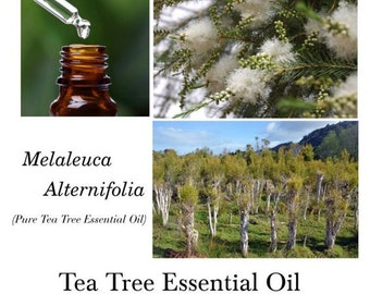 Tea Tree Premium Essential Oil, Tea Tree Essential Oil, Tea Tree Oil (Melaleuca alternifolia) – 100% Pure Authentic Tea Tree EO